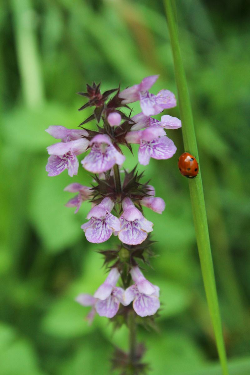 Bieszczady flora