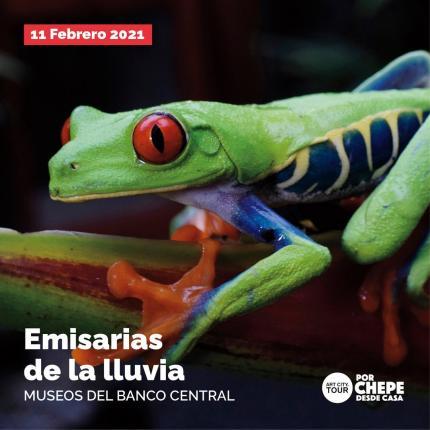 """""""Emisarias de la lluvia"""", un acercamiento a las ranas y sapos desde la perspectiva arqueológica, etnográfica y biológica"""