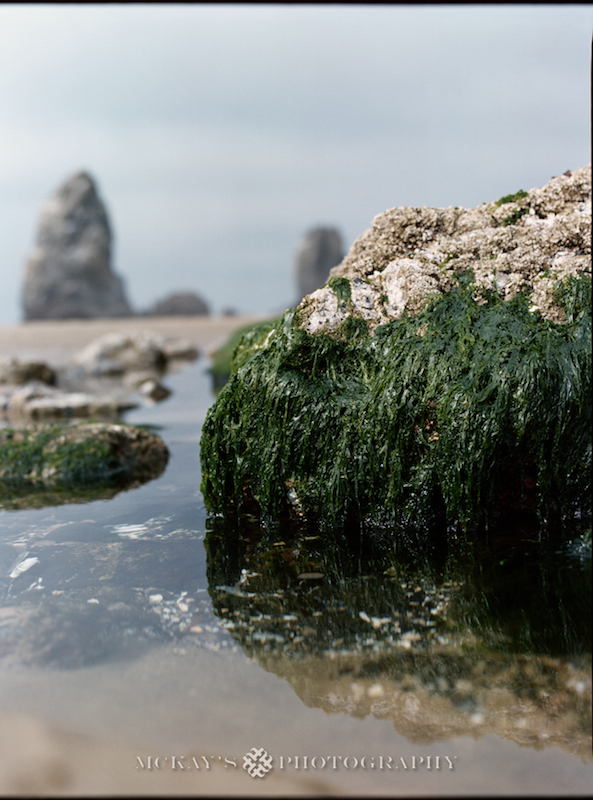Medium Format film Haystack Rock Photos by Heather McKay on Cannon Beach, Oregon