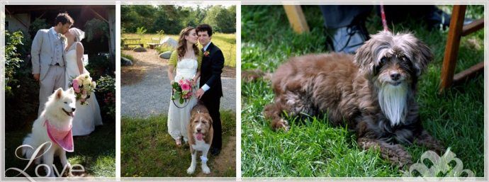fur baby and dogs at weddings