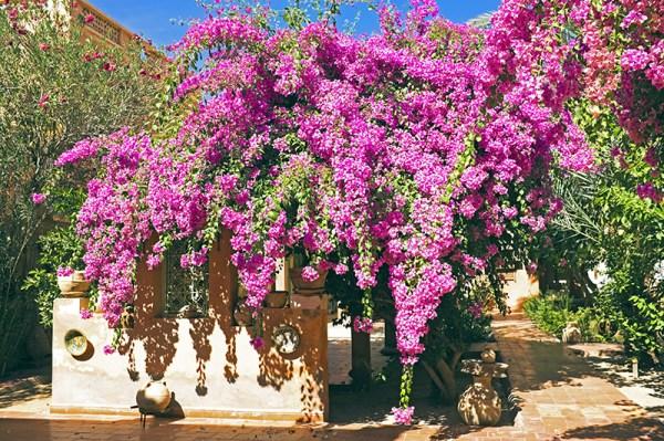 5 drought tolerant plants
