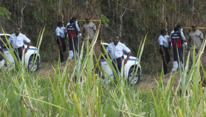 Dead Men Found in St Elizabeth Bushes