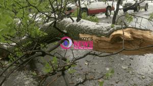 11-Year-old Boy Injured by Falling Tree Branch in Kingston