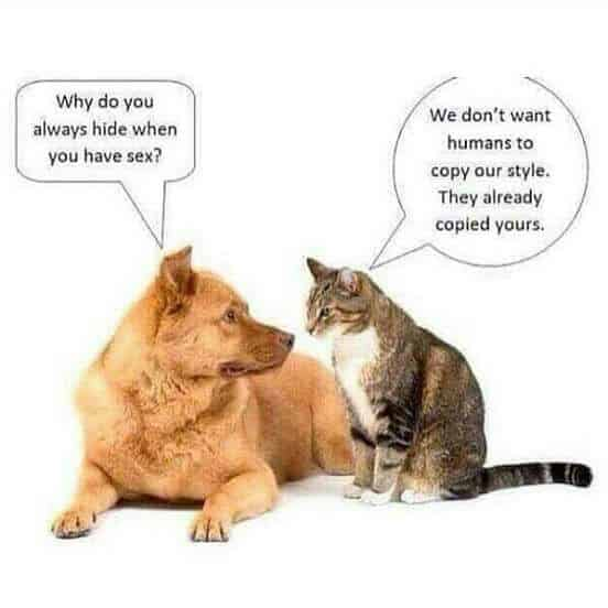 Dog and Cat Discuss Sex Positions