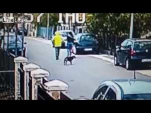 Stray Dog Saves Woman From Robbery
