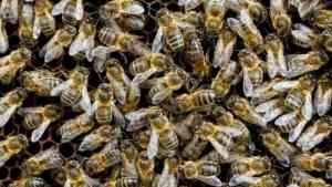Large-Scale Study 'Shows Neonic Pesticides Harm Bees'