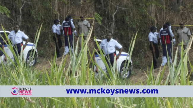 Skeletal remains found in Linstead