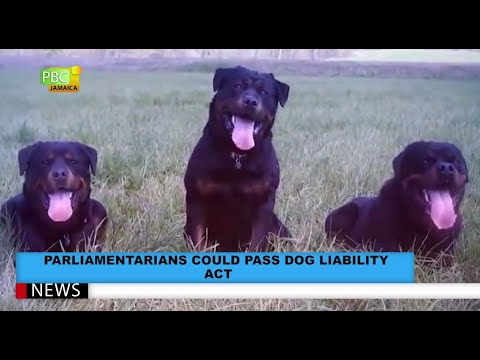 Parliamentarians Could Pass Dog Liability Act