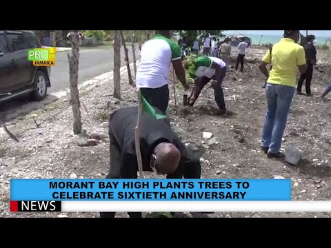 Morant Bay Plant Trees To Celebrate Sixtieth Anniversary