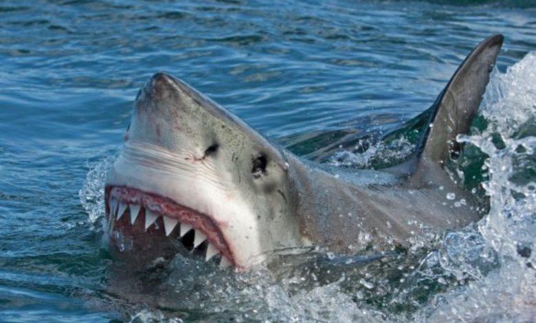 Fisherman Killed By Shark In Westmoreland