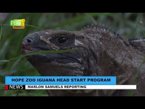 Hope Zoo Iguana Head Start Program