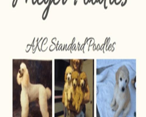 Myer Poodle Logo