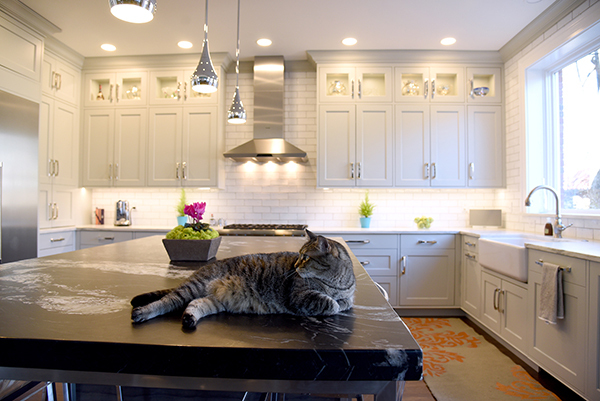 Gray cat matches counterton