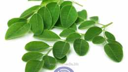 health-benefits-of-moringa-www.mcmultimedia.biz-mcBLOG-1