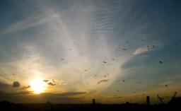 042 'Flock' - Istambul