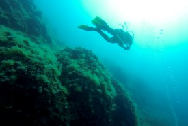 Diving.. one of my favourite hobbies.