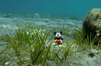 Took a picture of Mickey Mouse under water.