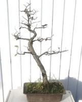auction-hornbeam-23
