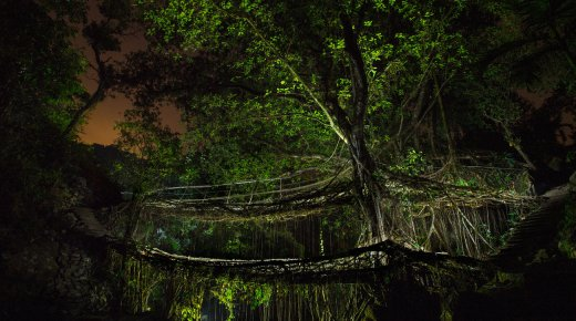 PHOTOS: Living Tree Bridges In A Land Of Clouds