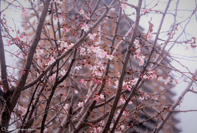 The First Blossom.jpg