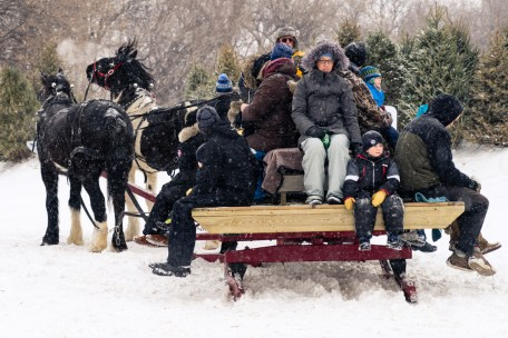 Picture of Festival du Voyageur Horse in Winnipeg Manitoba Canada by mcmessner Mary Catherine Messner