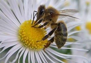 Las abejas pueden contar