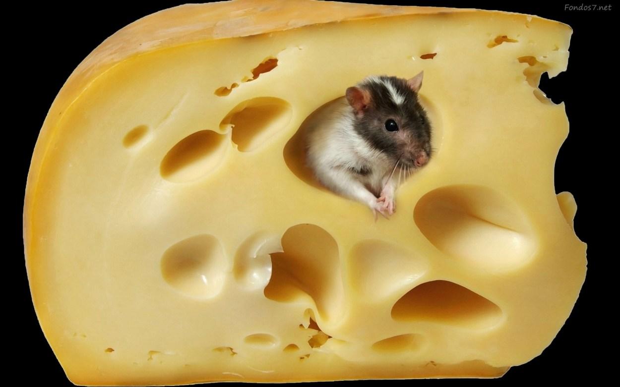 Los ratones son alérgicos al queso