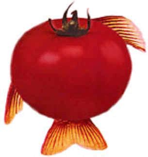 GMOs Tomato