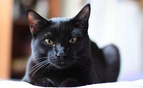 R1m : « chat noir » !