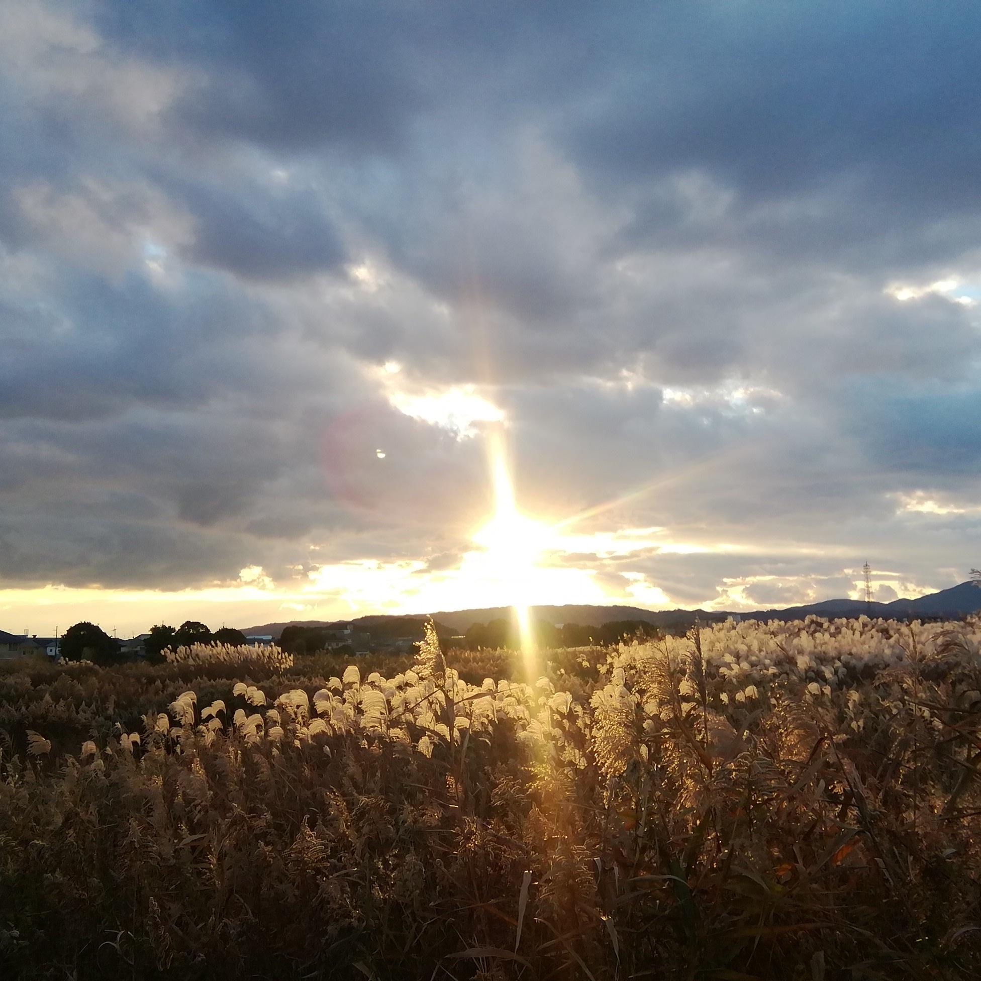 〜大和路の夕陽に白き芒かな〜