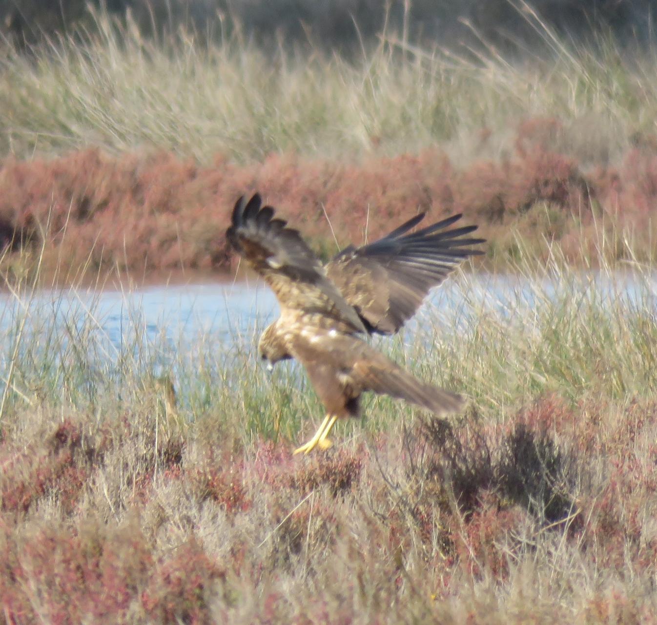 Female hovering