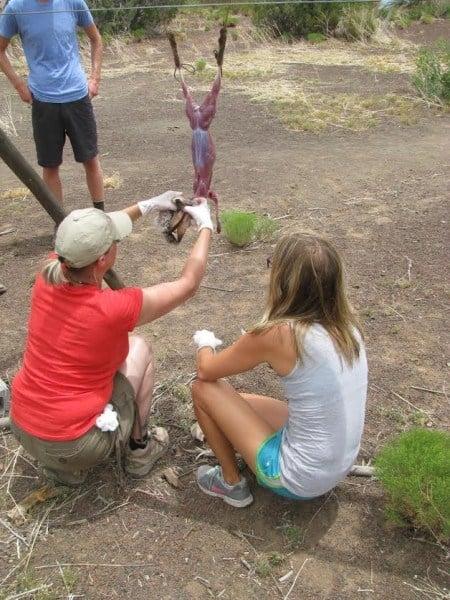bushcraft skills field-dressing-a-rabit
