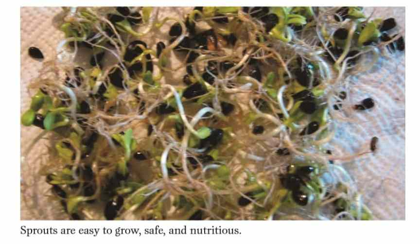 sprout grains for food