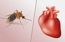 The impact of dengue fever on the heart   mdCurrent India