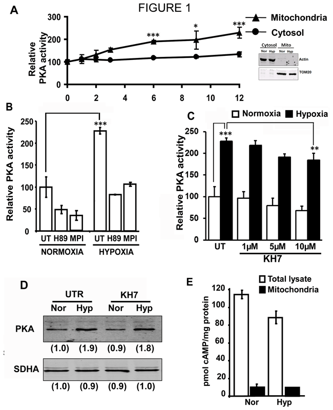 Oxidative stress induced mitochondrial protein kinase A