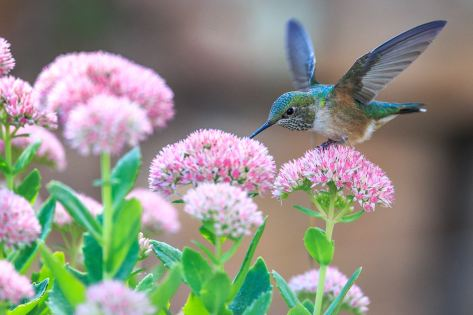 Don't walk instead stroll and slow down to admire the beautiful hummingbird.