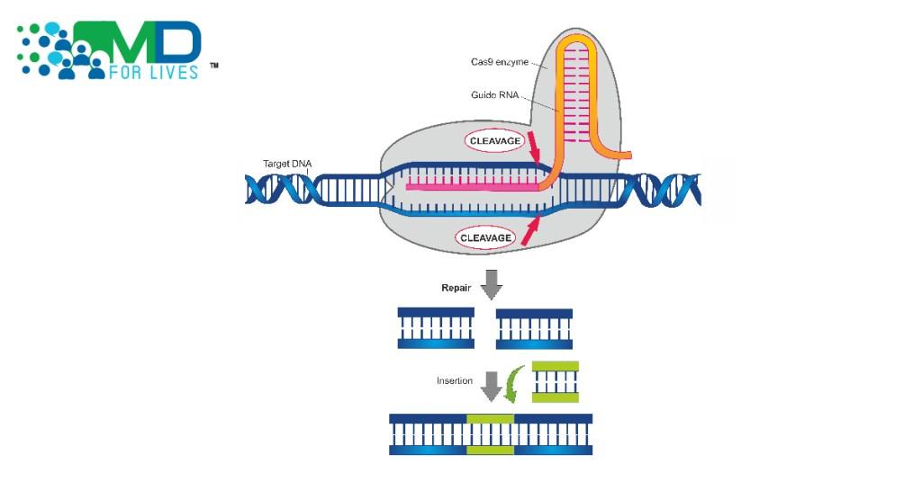 CRISPR-Based Diagnostics