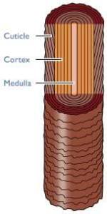 hair benefits coconut oil