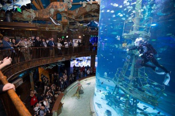 MDM Pumps Wonders of Wildlife Museum aquarium installation side view