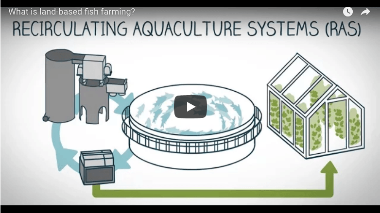 MDM Pumps Recirculation Aquaculture tutorial