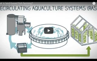 MDM Pumps Recirculation Aquaculture tutorial