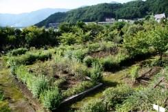 Grădină pe malul lacului