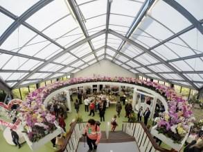 Keukenhof - orchids pavillion