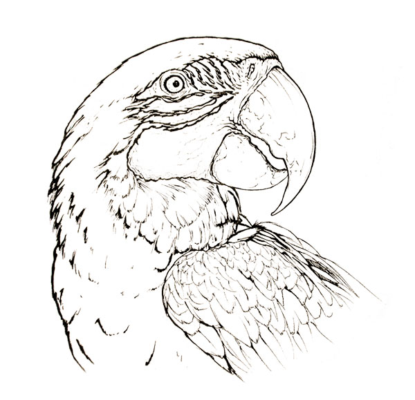 Blue-and-yellow macaw parrot animal coloring page