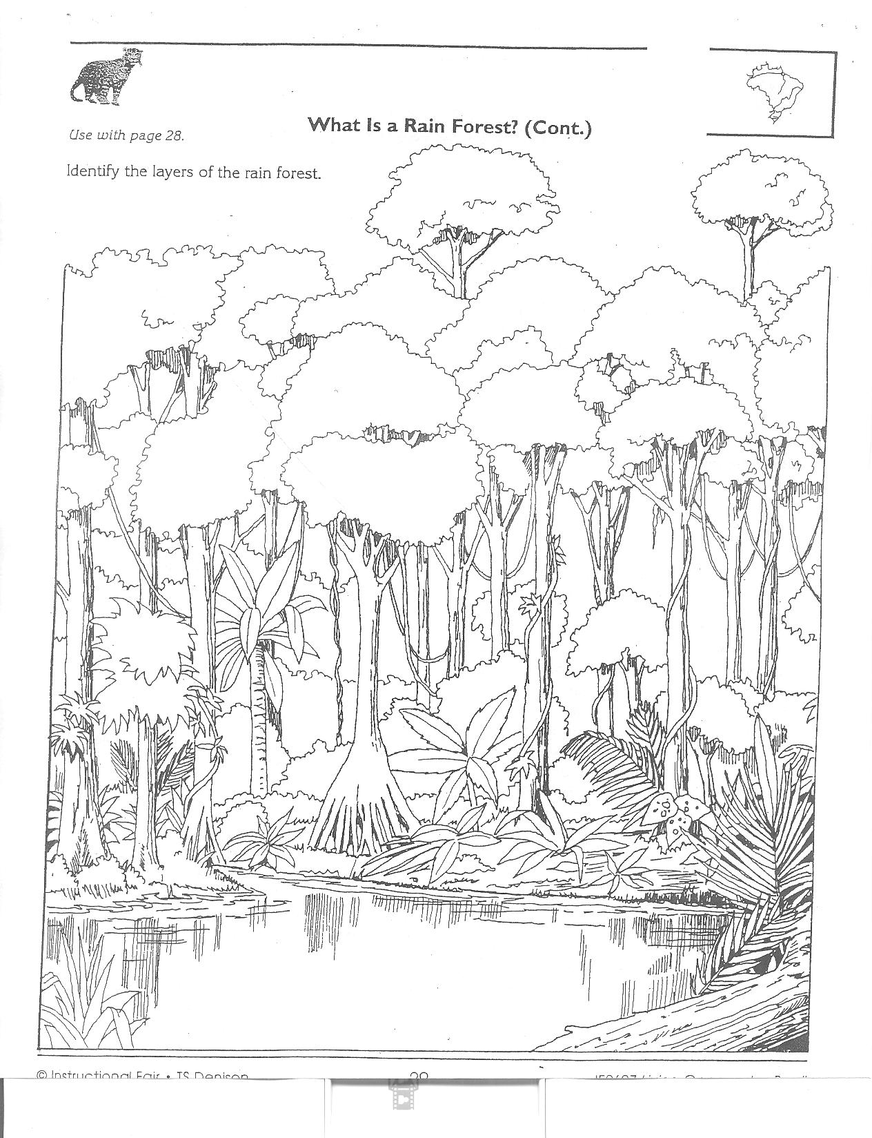 diagram of a tropical forest lutron 4 way wiring free rainforest crossword coloring pages