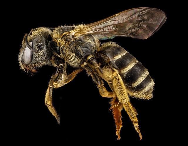 Τρως έξω και σε ζαλίζουν οι μέλισσες;