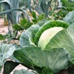 Θέλετε λαχανόκηπο χωρίς ζουζούνια;
