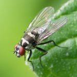 Ο λεκές που αφήνουν οι μύγες