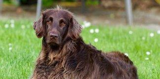 Για σκύλο με όμορφο τρίχωμα