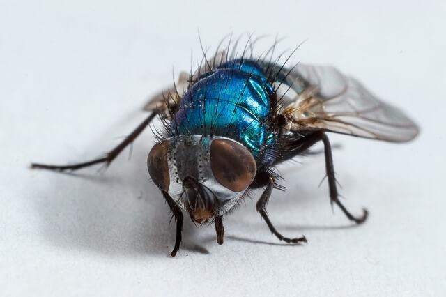 Μύγες στο δωμάτιο; Υπάρχει κόλπο!